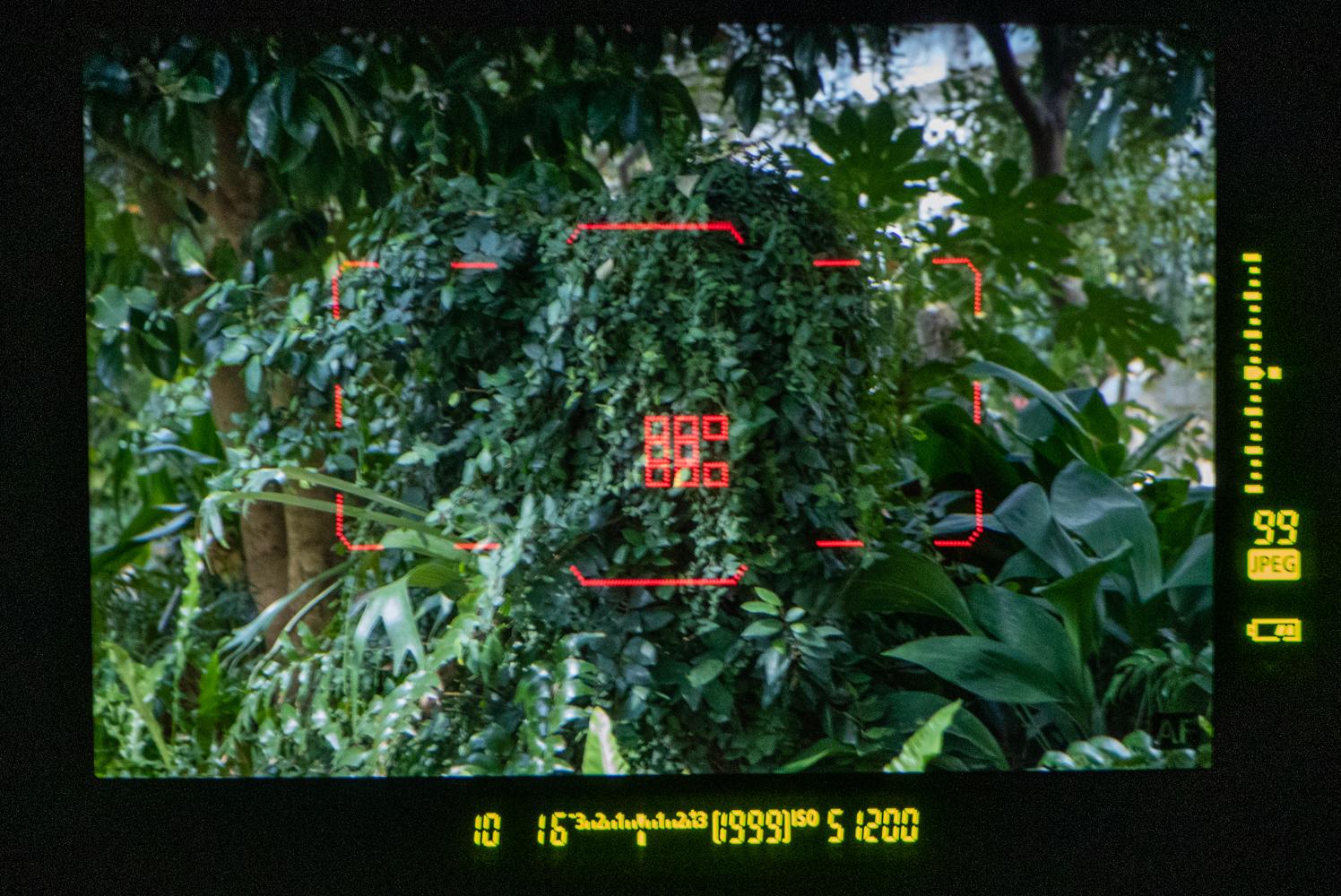 캐논 DSLR 1DX Mark3의 머리 검출 AF로 고속연사가 더 빛이 나다