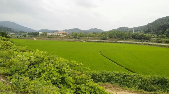 4차선 도로 접한 토지