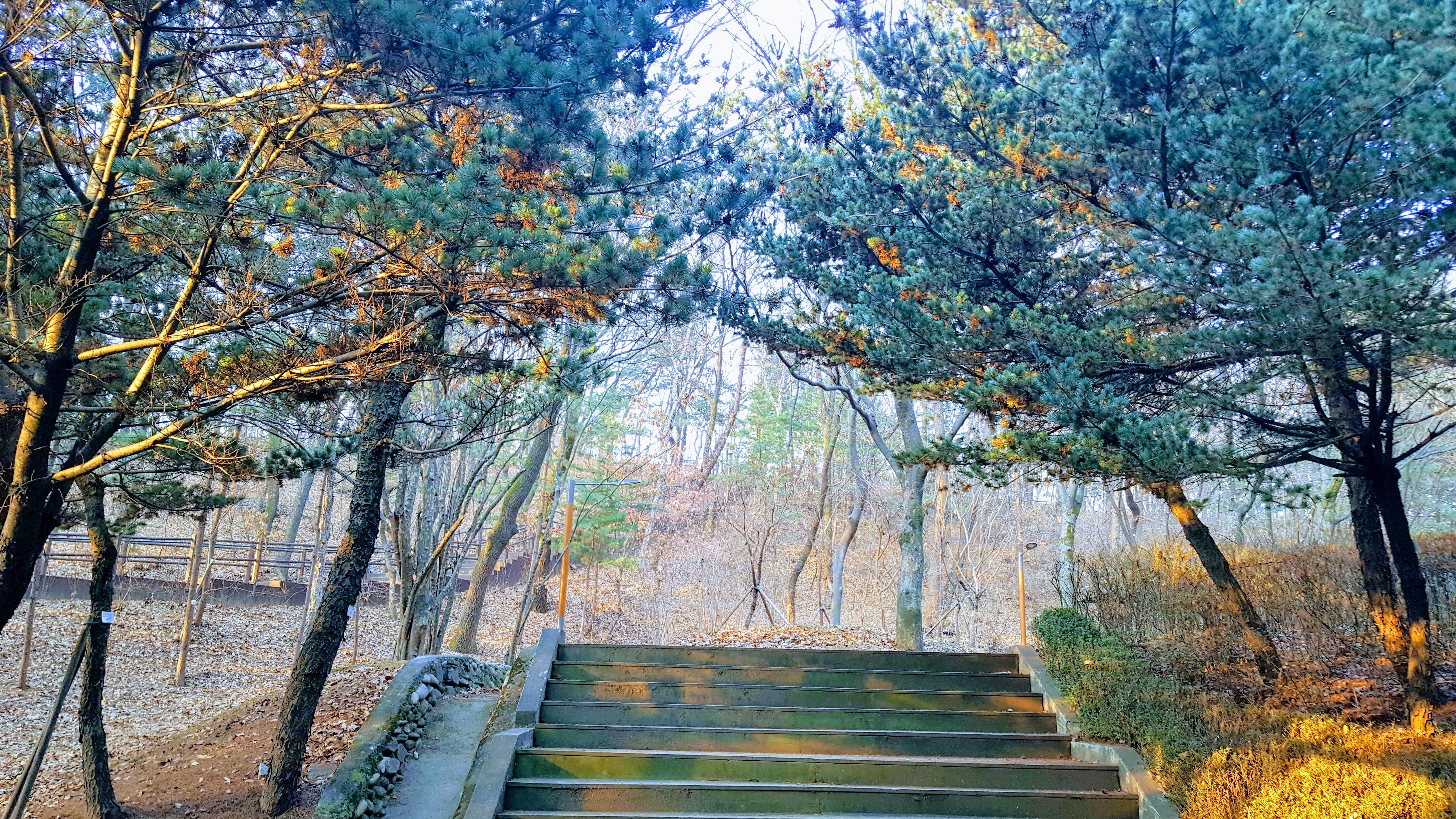 가을을 맞은 오금공원과 송파도서관