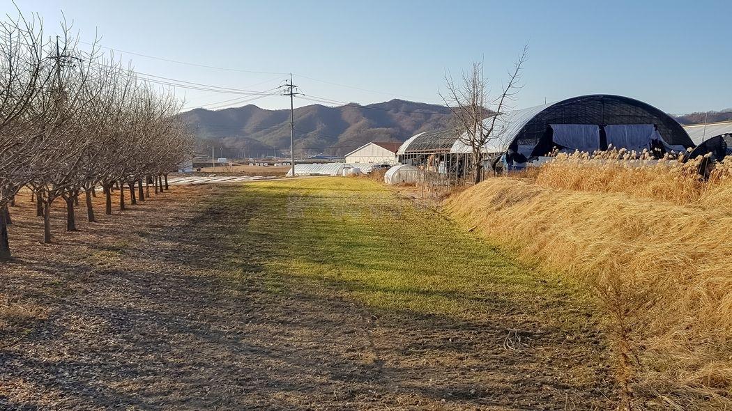 면소재지 인근 마을내 자리한 300평대의 주택지