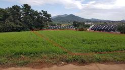 서산 한적한 마을 구릉지 야산자락 밭 특급매물입니다.
