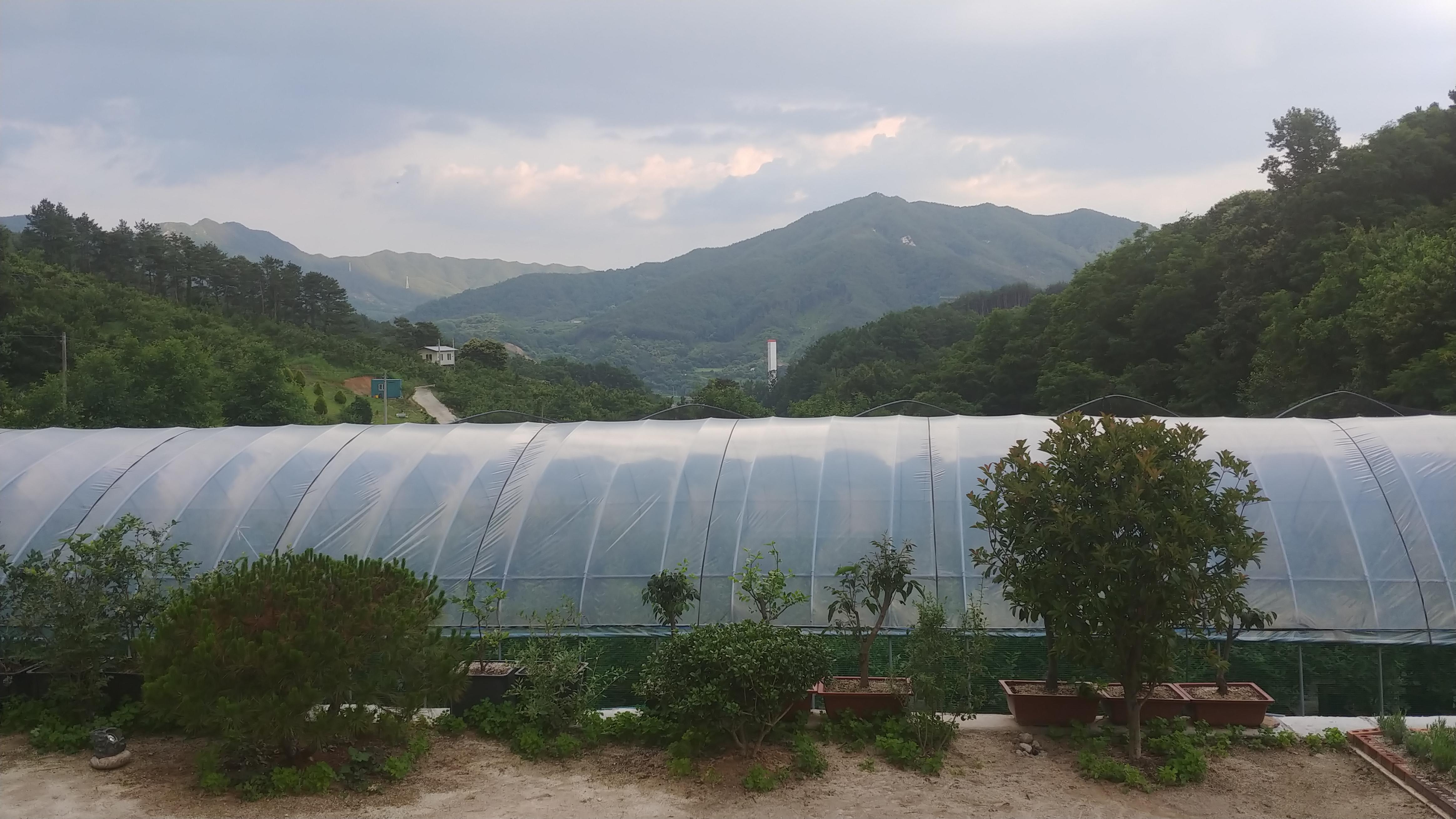[행족찾기] 2020. 6. 19. 죽풍원 풍경
