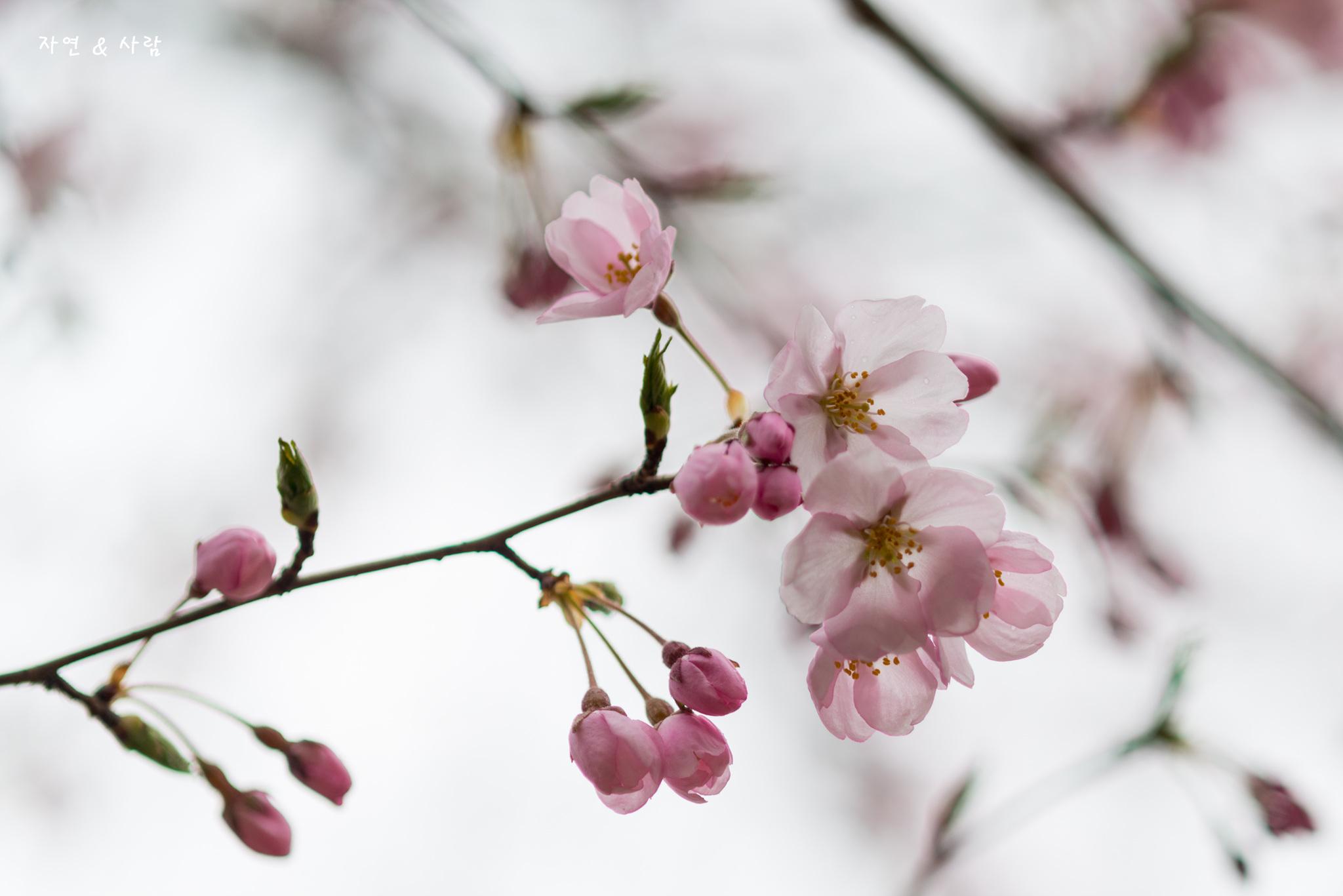 봄꽃 구경