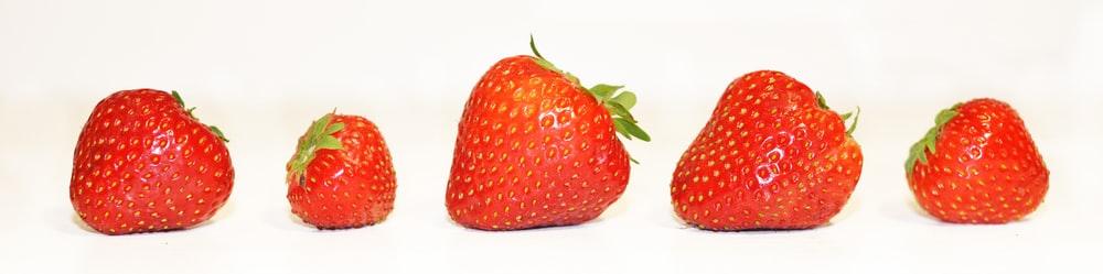 딸기의 메타살리실산