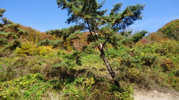 국유림속맨마지막옛날집터대지및관리지역토지4천평싸게처분